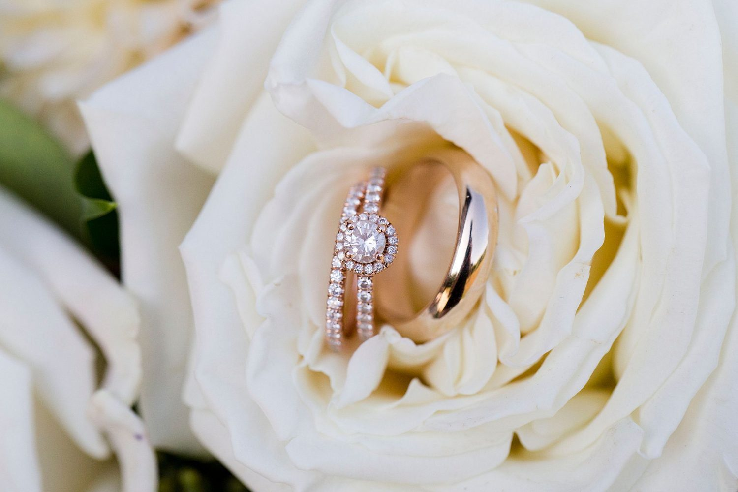 Wedding rings inside a white rose.