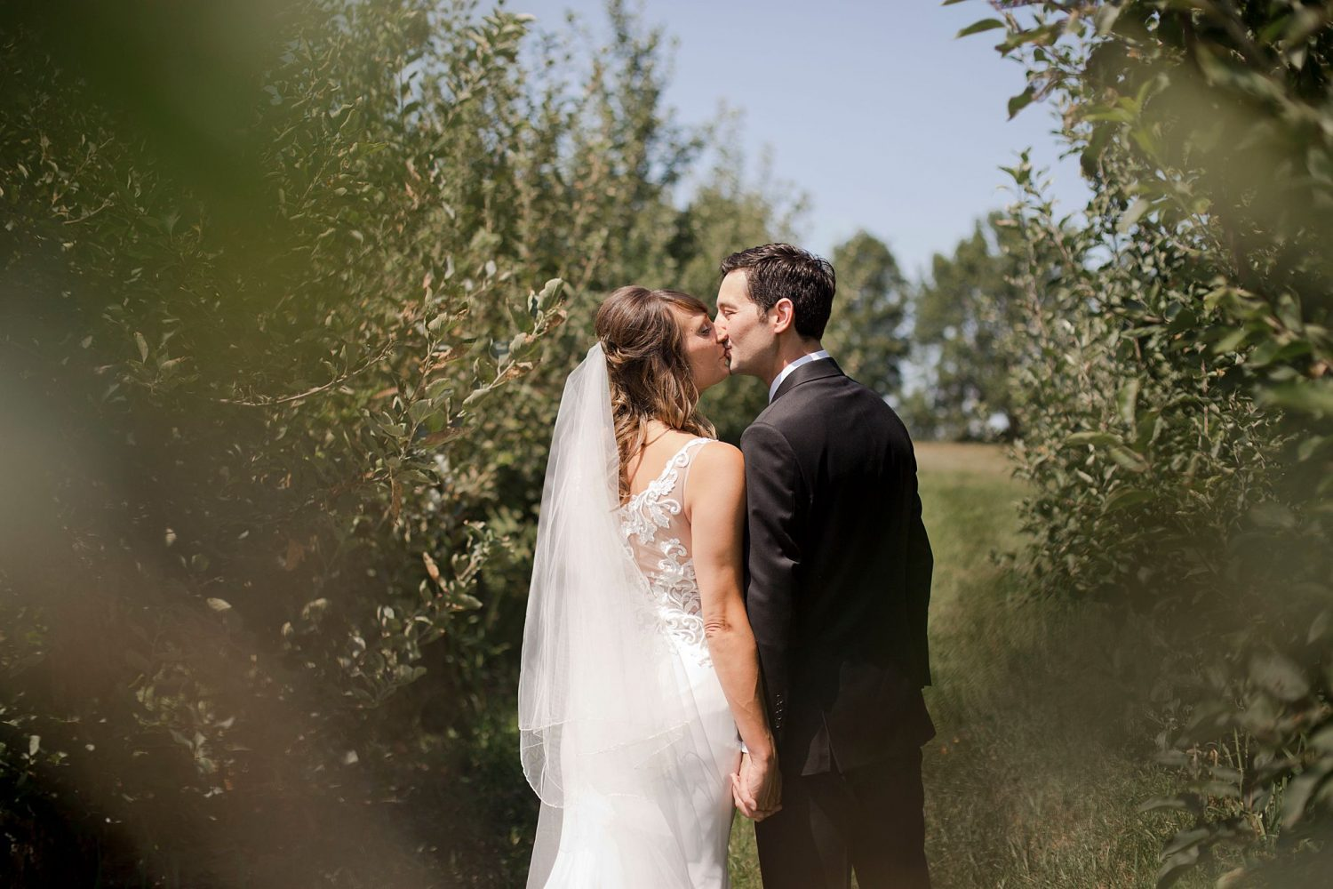 Bride and groom pose together in the orchard on the property of Rapid Creek Cidery in Iowa City. They lean in for a kiss with their backs facing the camera.